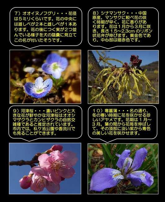 市民記者ブログ原稿【春の訪れ】2_3.jpg