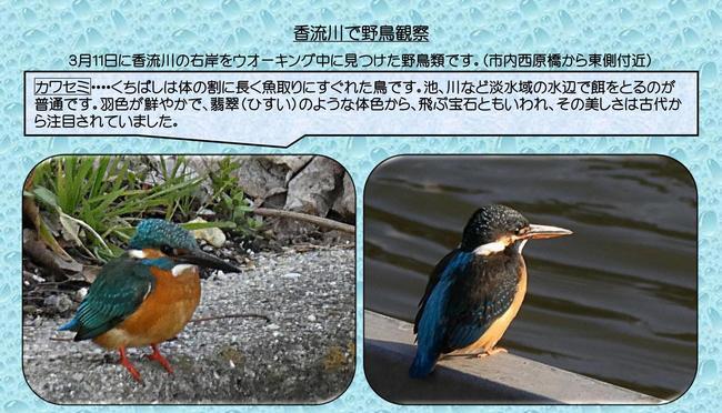 香流川野鳥1.jpg