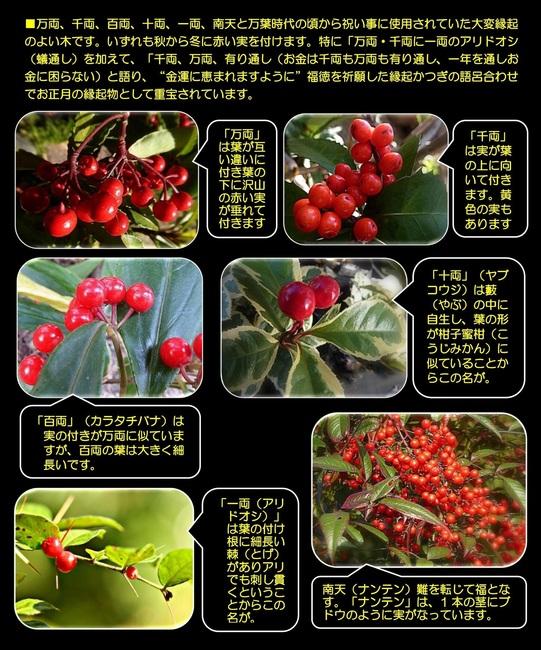 赤い実の縁起物.jpg