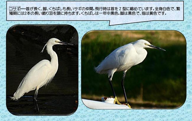 香流川野鳥2.jpg